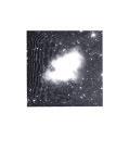 Nitro monotype, 19/24 cm, 2014